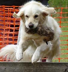 Dog Help - Becca Story