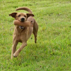 Dog Help Gun Dog Training