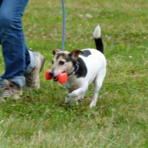 Dog Help Fun Obedience
