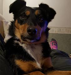 Dog Help Isla