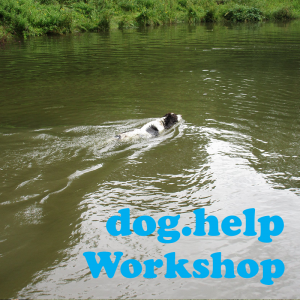 Dog Help Workshop Swimming Dog