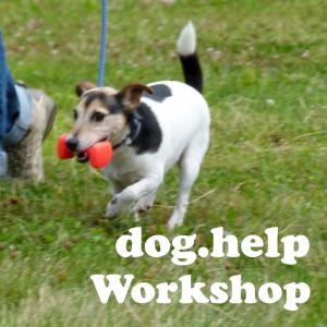 Dog Help workshops