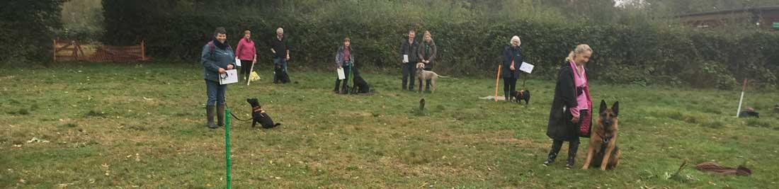 Dog Help Group Social Class