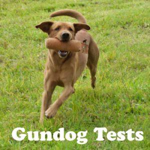 Dog Help Gundog Tests
