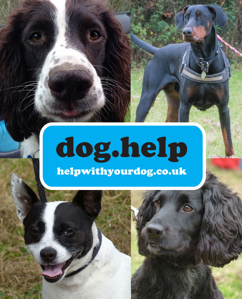 Dog.help Dog training somerset