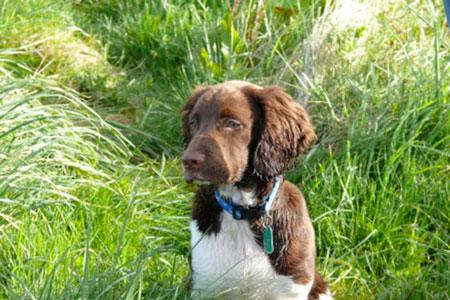 Dog help - Dougie 4