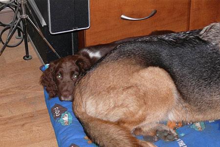 Dog Help - Dougie 5