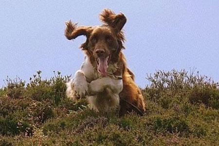 Dog Help - Dougie 1