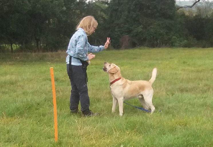 Dog Help general training